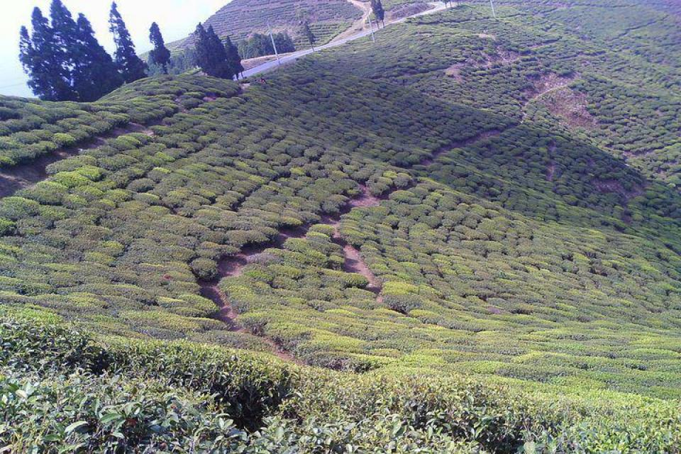 Kathmandu Valley and Tea Garden Tour
