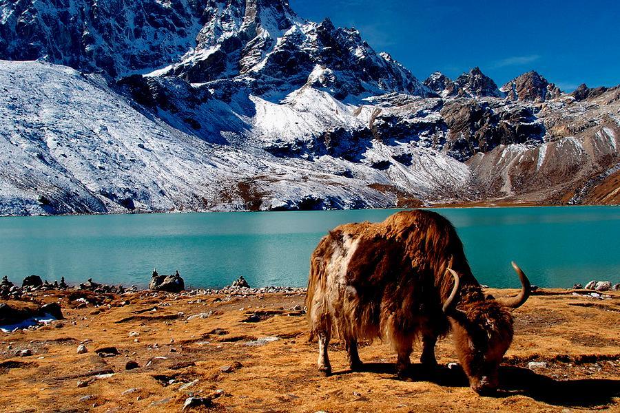 Everest Base Camp Trek via  Gokyo Cho La Pass Trek